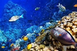 Bilder Mit Fischen : korallen und fische im roten meer stockfoto colourbox ~ Frokenaadalensverden.com Haus und Dekorationen