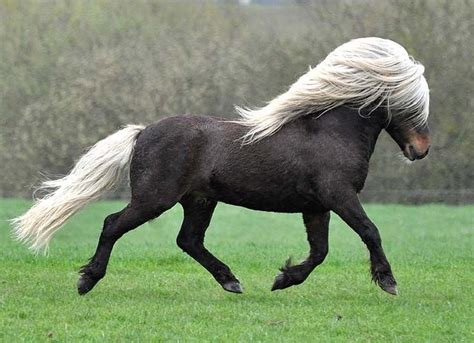 horse breeds expensive most pony horses list breed shetland luxurious animals wild uploaded