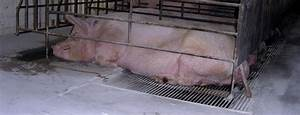 Project Pig