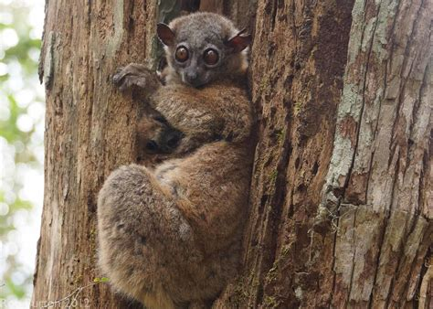 10 Definitions Of What Critically Endangered Means