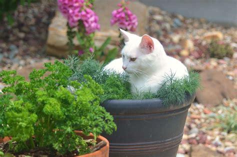 Katzen Vom Beet Fernhalten by Katzen Aus Dem Garten Fernhalten Katzen Vertreiben 6