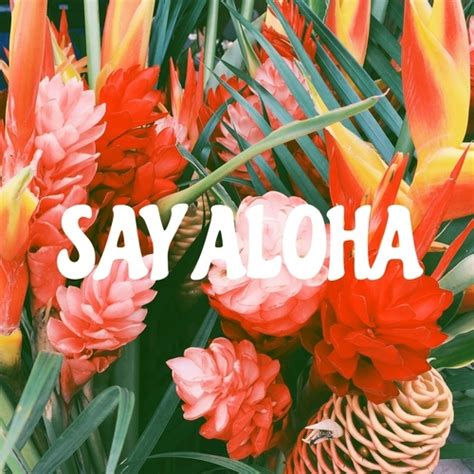 aloha pictures   images  facebook