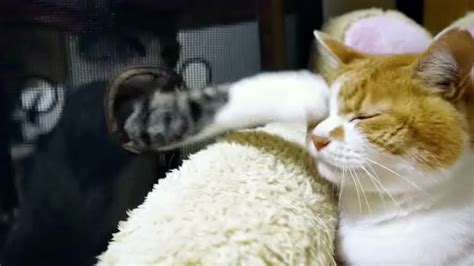 sneaky cats sneaky attack rtm rightthisminute