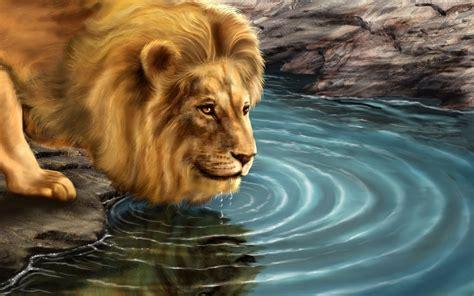 animal wallpapers animals computer wild lion pet desktop zoo background