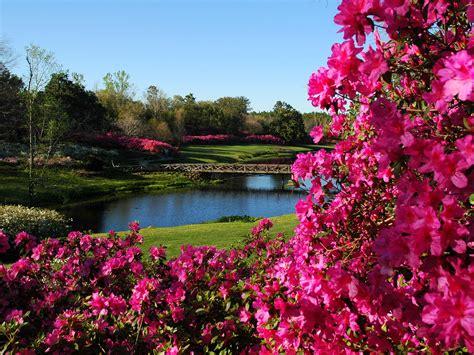 alabama  bloom  bellingrath gardens alabama newscenter