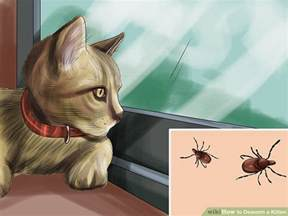 how to deworm a cat how to deworm a kitten 11 steps with pictures wikihow