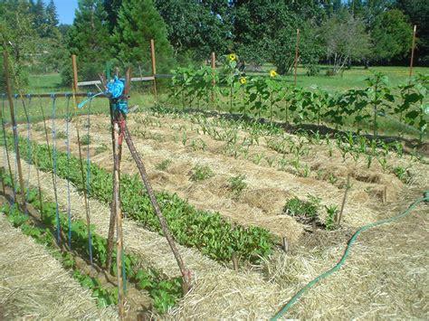 mulch gardens the sharing gardens the benefits of deep mulching