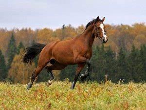 Heu Kaufen Für Pferde : pferde kaufen wichtige tipps die du vor dem kauf beachten musst ~ Orissabook.com Haus und Dekorationen