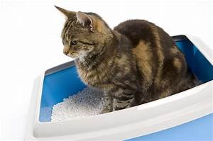 the scoop on kitty litter mission valley news mission With cat letter box