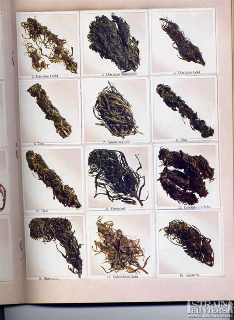 top  weed strains  full colour chill  lounge