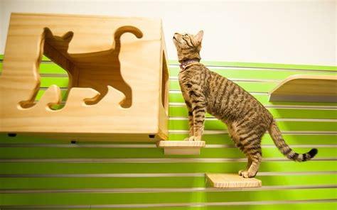 warum pinkelt ka warum pinkelt katze auf teppich simple