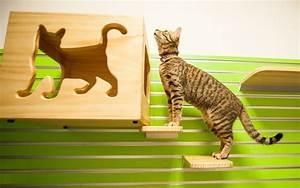 Zimmer Geruch Entfernen : deine katze pinkelt ber all hin wir helfen dir ~ Markanthonyermac.com Haus und Dekorationen