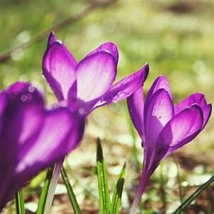 Was Sind Frühlingsblumen : die sch nsten fr hlingsblumen ~ Whattoseeinmadrid.com Haus und Dekorationen