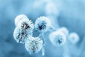 Blumen Im Winter : fleurs d 39 hiver des fleurs et des etoiles ~ Eleganceandgraceweddings.com Haus und Dekorationen