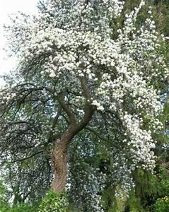 Bäume Und Sträucher Für Den Garten : schnellwachsende b ume f r den garten gehlze bume und ~ Michelbontemps.com Haus und Dekorationen