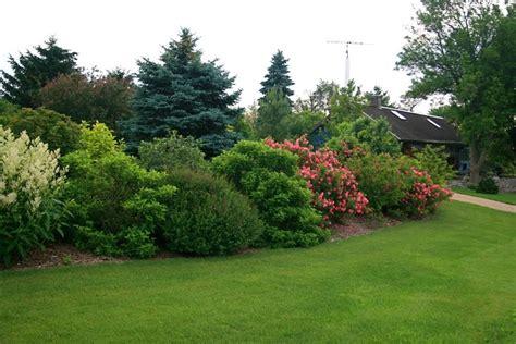 shrubs for borders mature shrub border landscape pinterest