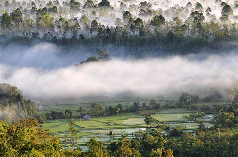 morning fogs  bukit barisan selatan national park