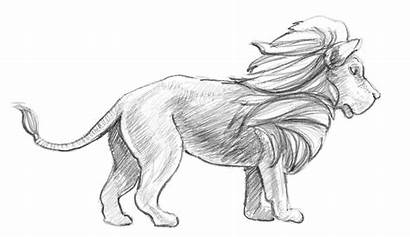 Lion Draw Sketch Drawing Easy Drawings Pencil