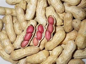 Tennessee Red Valencia Heirloom Peanut Seeds 5-8 Peanuts ...
