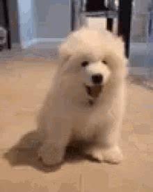 Woof Woof GIFs | Tenor