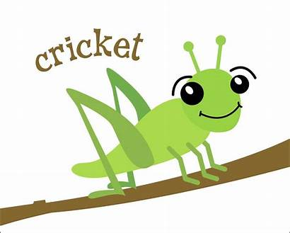 Cricket Cartoon Insect Crickets Clipart Bug Insects