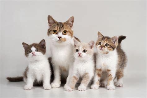 Cats Timecom