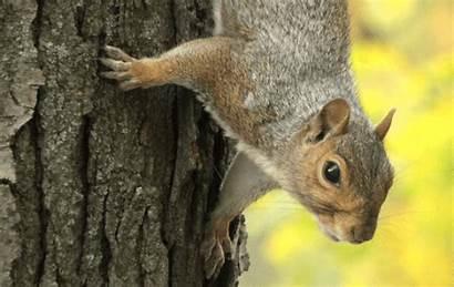 Squirrel Squirrels York Florida Grey Close Eastern