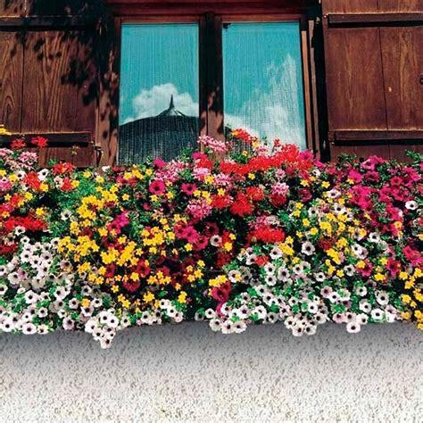 Balkonpflanzen Pflegeleicht Robust by Sommerblumen Sortiment Bunter Kasten G 228 Rtner P 246 Tschke