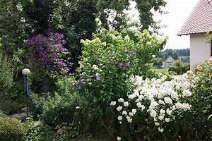 Sträucher Für Garten : sch ne bl tenstr ucher f r den garten native plants ~ Buech-reservation.com Haus und Dekorationen