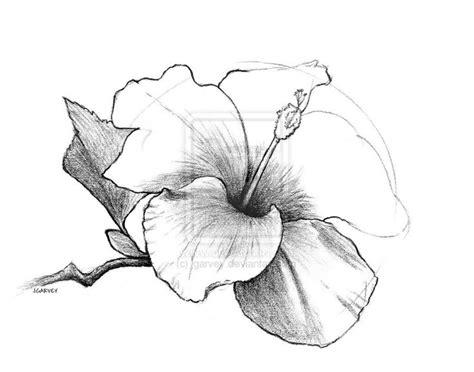 draw flowers drawing hibiscus flower  jgarvey