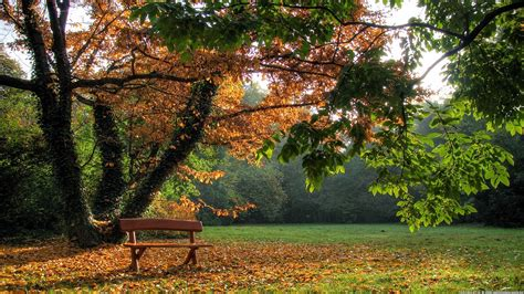 alberi autunnali e panchina in un parco immagine gratis and that was how he discovered the love