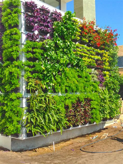 Jardines Verticales  Semillas Y Cultivos