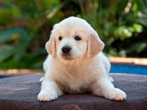 adorable big dogs puppy pictures tail  fur
