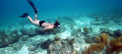 diving bimini bahamas bimini adventures