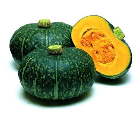 squash vegetable 20 top notch squash varieties slideshow growing produce
