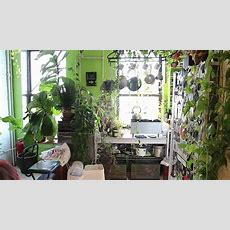 How To Green Your Home (part 1) Build An Indoor Vertical