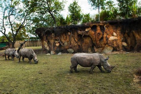 zoo zoos houston exhibits animal omaha courtesy diego san conservation