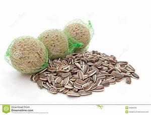Graines De Tournesol Pour Oiseaux : nourriture sauvage d 39 hiver d 39 oiseau graines de tournesol ~ Dailycaller-alerts.com Idées de Décoration