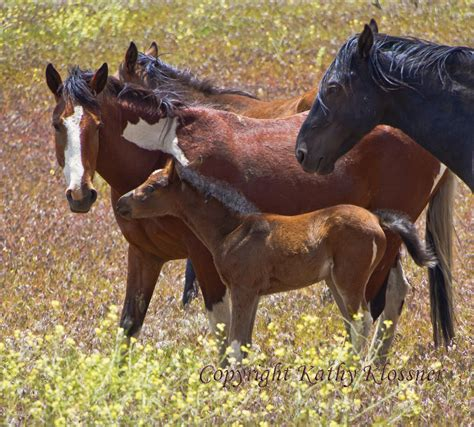 springtime  mustang baby horses mustang photo gallery