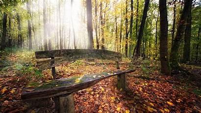 Autumn Forest Wallpapers Desktop Nature Fall Wallpapersafari