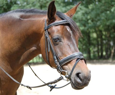 durchfall beim pferd reine chinesische kraeuter
