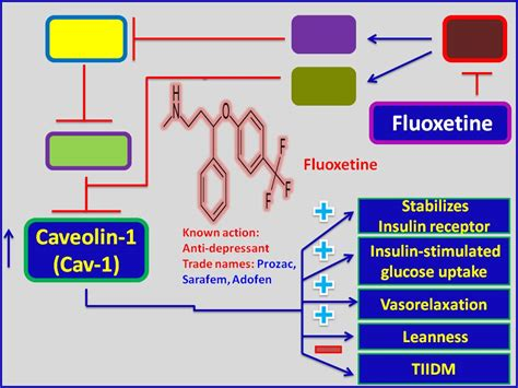 antidepressant based therapy  metabolic diseases