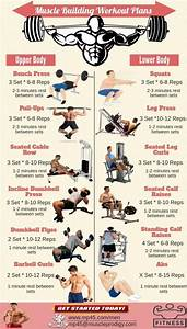 Muscle Building  Muscle Building Workout Routine For Men  Bodybuilding