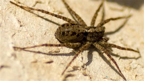 How To Get Rid Of Spiders Diy Methods That Keep Houses