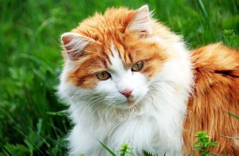 giardien bei katzen hunden symptome behandlung