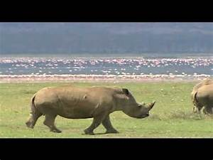 Kenya's tourism industry grows - YouTube