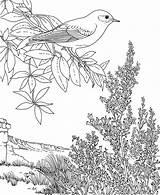 Coloring Bluebird Pages Mountain Nevada Flower Bird Printable State Sheets Eastern Mountains Sagebrush Sierra Yellow Printables Finch Animals Birds Purplekittyyarns sketch template
