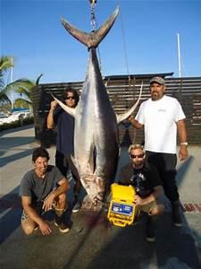 Fishing Puerto Vallarta | MasterBaiters's Sportfishing ...
