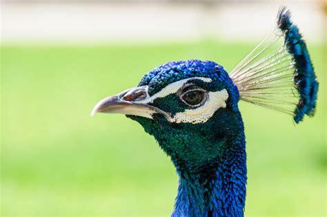 gambar alam burung hewan margasatwa paruh warna