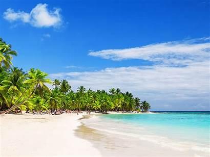 Coconut Dominican Republic Trees Beach Sandy Tropical